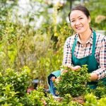 woman-landscape-gardening-fort-collins